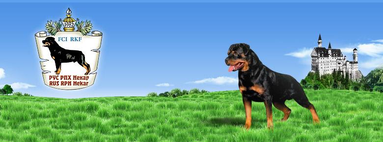 http://www.rottweiler-rus.ru/img/shapka.jpg